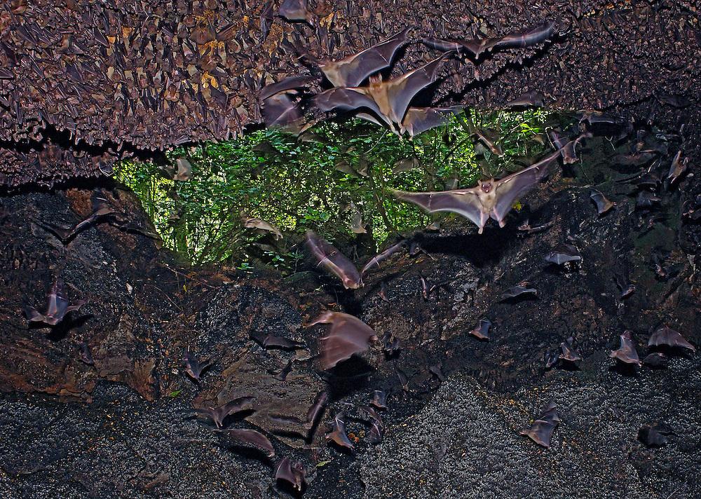 Uganda Cave (Egyptian Fruit Bats/African Rock Python)
