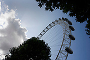 The 135 metres (443 ft) high London Eye, seen through summer tree foliage on the South Bank's Millennium Walk in Waterloo. .