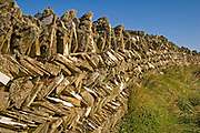 Dry stone wall with herring bone pattern covered with lichen, Cornwall, U.K.