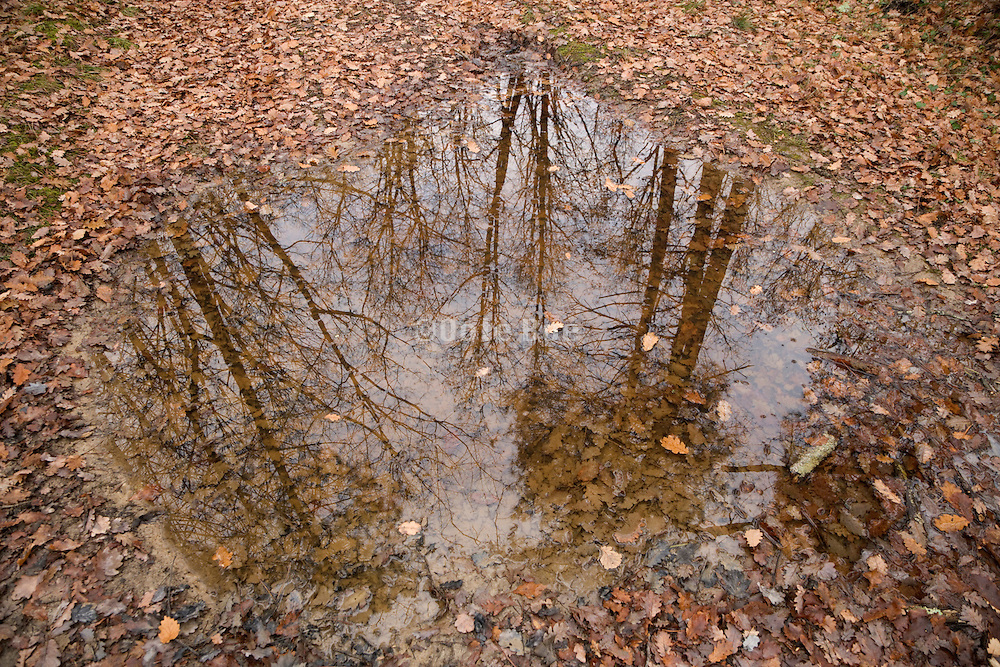 bare trees reflecting in a pool of water with brown leaves floating