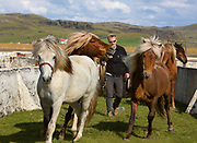 Horse riding in Southern Iceland. <br /> Resting at the sheep pens at Hrunarettir.