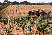 Tobacco - cultivating tobacco with a mule near Charlotte, Tennessee. The farmer's broken down tractor is in the foreground. USA.