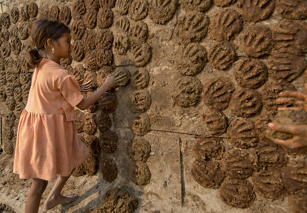 A girl makes cakes of dried cow dung and presses them against a wall to dry in Varanasi, India. The cakes are made from cow dung and hay mixed together, and will serve as fuel for home cooking stoves.