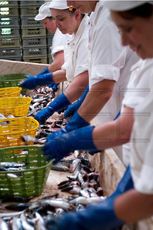 Workers of a canned Sardine clean the sardines before been cooked. In this factory there are 160 workers, 150 are women. The canned Sardine industry is suffering due to the economical crisis.