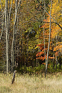 Chester, New York  - Fall scenes at Goosepond Mountain State Park on Oct. 14, 2013.