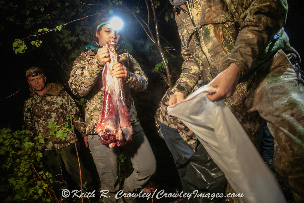 Field dressing and skinning a black bear at night