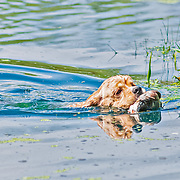 2020 CSHESW Hunt Test Friday | Water | 7/24/2020