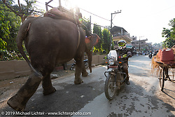 Tattoo artist Justin Big Meas Wilson riding a Royal Enfield Himalayan as an elephant heads in the other direction in Chitwan during Motorcycle Sherpa's Ride to the Heavens motorcycle adventure in the Himalayas of Nepal. Riding from Chitwan to Daman. Tuesday, November 12, 2019. Photography ©2019 Michael Lichter.