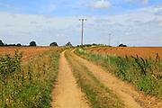 Rural electricity supply lines running across countryside, Alderton, Suffolk, England