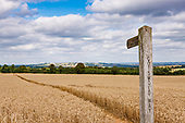 UK - Countryside