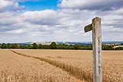 Summer haze and paths through the ripe wheat crops