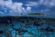 gray reef sharks, Carcharhinus amblyrhynchos<br /> Bikini Atoll, Marshall Islands<br /> Micronesia (Pacific)