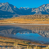 Mount Morrison, Laurel Mountain and the Eastern Sierra Nevada crest reflect in Big Alkali Lake in Long Valley near Mammoth Lakes, California.