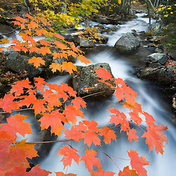Jordan Stream in fall in Maine's Acadia National Park.  Sugar maple trees.