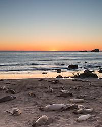 Relaxing Elephant Seals at sunset in San Simeon California
