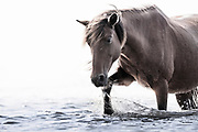 """""""The journey of a thousand miles begins with the first step"""" ~ Lao Tzu<br /> <br /> Tracie Spence's fine art photography series of The Spanish Wild Mustangs."""