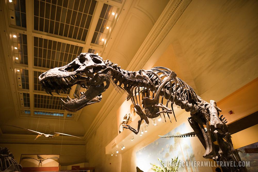 In April 2014 the dinosaur hall at the Smithsonian Institution's National Museum of Natural History will close to undergo a 5-year renovation.
