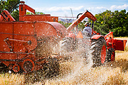 Farm Collaborative's agricultural director Cooper Means harvests oats using an antique combine on a property in Old Snowmass, Colorado.