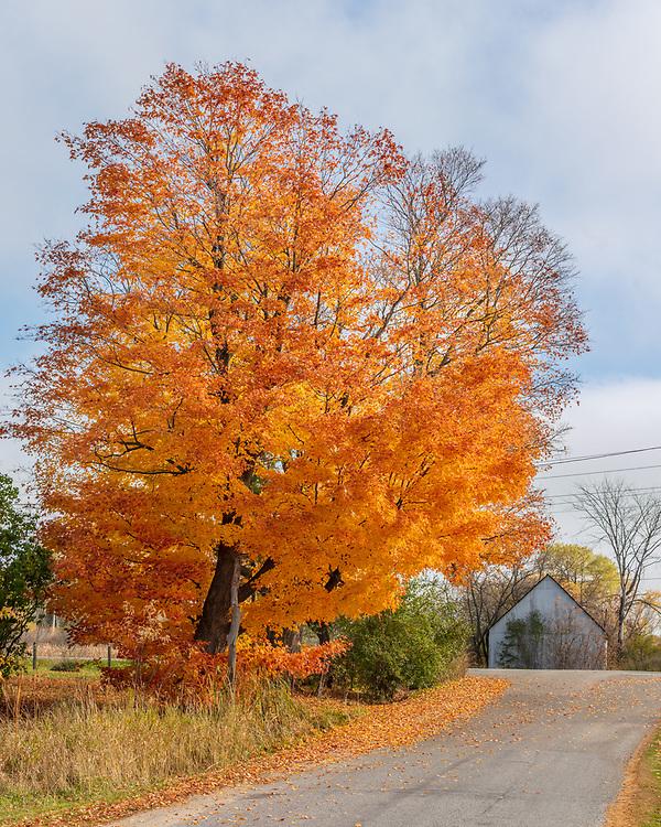 https://Duncan.co/orange-leaves-and-barn