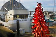Flowers & fishing boats at the Embarcadero waterfront, Morro Bay, California