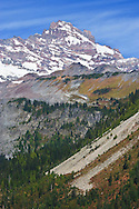 Little Tahoma towers above autumn colors on Stevens Ridge and in Stevens Canyon - Mount Rainier National Park, WA USA.