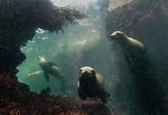 La Jolla Cove Tees