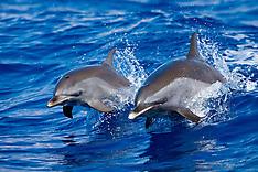 Dolphin Babies