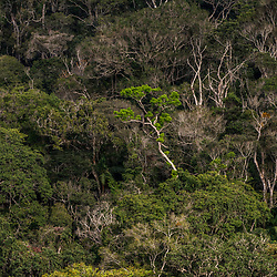 """Floresta (paisagem) fotografado em Santa Teresa, Espírito Santo -  Sudeste do Brasil. Bioma Mata Atlântica. Registro feito em 2016.<br /> <br /> <br /> <br /> ENGLISH: Forest Landscape photographed  in Santa Teresa, Espírito Santo - Southeast of Brazil. Atlantic Forest Biome. Picture made in 2016."""