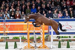 228, Rapide-K van't Kattenheye<br /> KWPN hengstenkeuring - 's Hertogenbosch 2020<br /> © Hippo Foto - Dirk Caremans<br />  29/01/2020