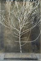 Skeleton of desert plant. Studio still life.  Photo based mixed medium image. Extreme image softness, textures, and grain.