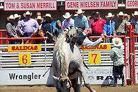 Bareback bronc rider Tyson Thompson gives his all at the 102nd California Rodeo Salinas, which opened July 19 for a four-day run.