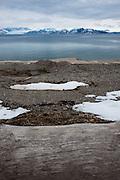 Siberian driftwood on the beach at Ny-Alesund, Kongsfjord, Svalbard