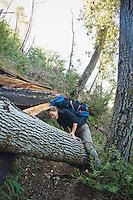 Backpacker climbs over a tree crossing Pine Ridge Trail, Big Sur, California.