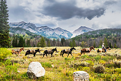 A pack string coming out from putting in camp in the Gros Ventre Mountains of Northwest Wyoming