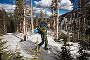 Backpacker Brian Bernhardt snowshoes through subalpine forest on a sunny day in Baker Gulch, Never Summer Wilderness, Colorado.