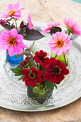 Dahlia 'Bishop of Auckland', 'Classic Rosamunde' and 'Juliet' in vases