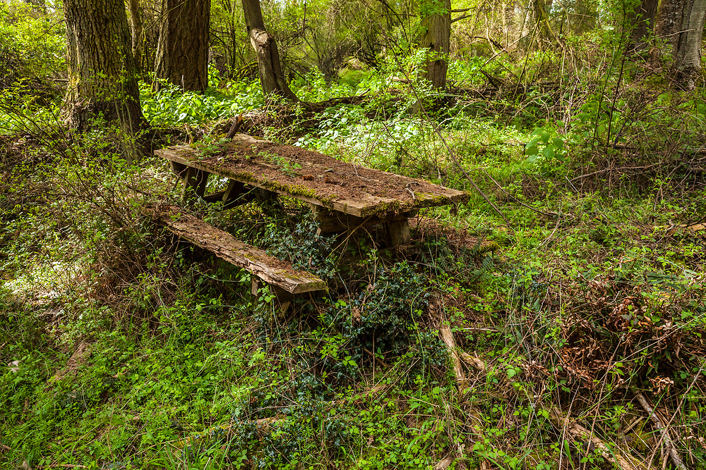 An old wooden picnic table abandoned in the forest.