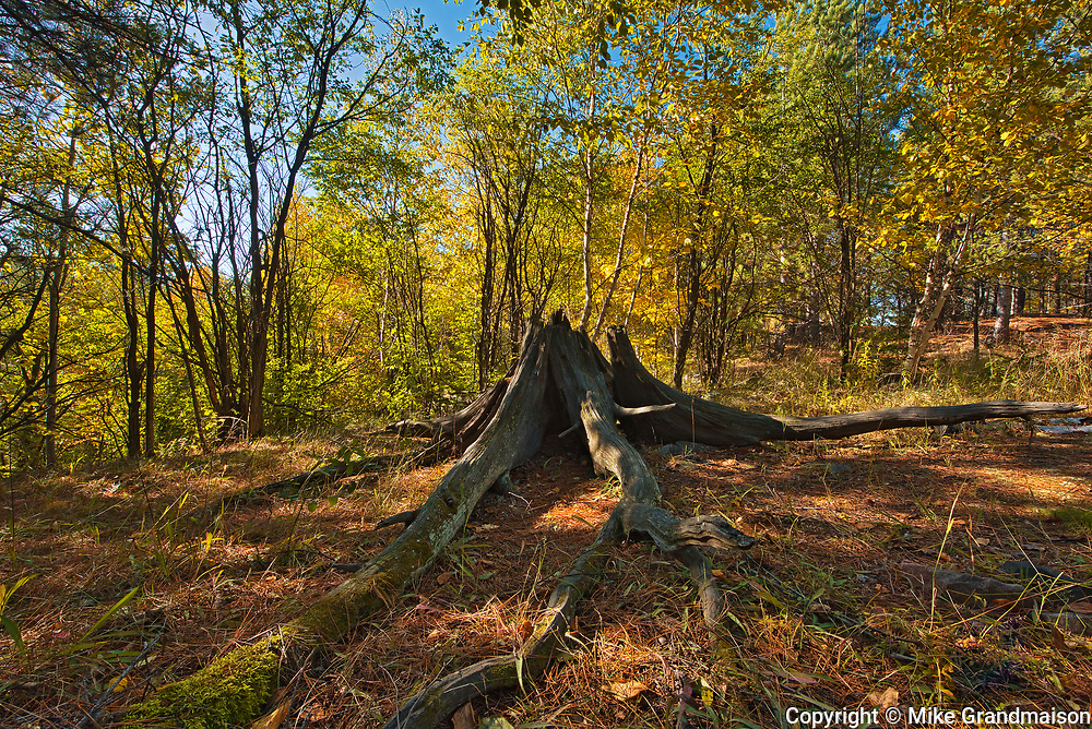 Old stump that was transplanted here for educational purposes. Reclaimed landscape. Jane Goodall Trail at corner of Hwy 17 and Garson Coniston Road.<br />Greater Sudbury<br />Ontario<br />Canada