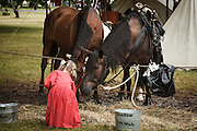 USA, Oregon, Brooks, Willamette Mission State Park, little girl Civil War reenactor hand feeding some of the cavalry horses.