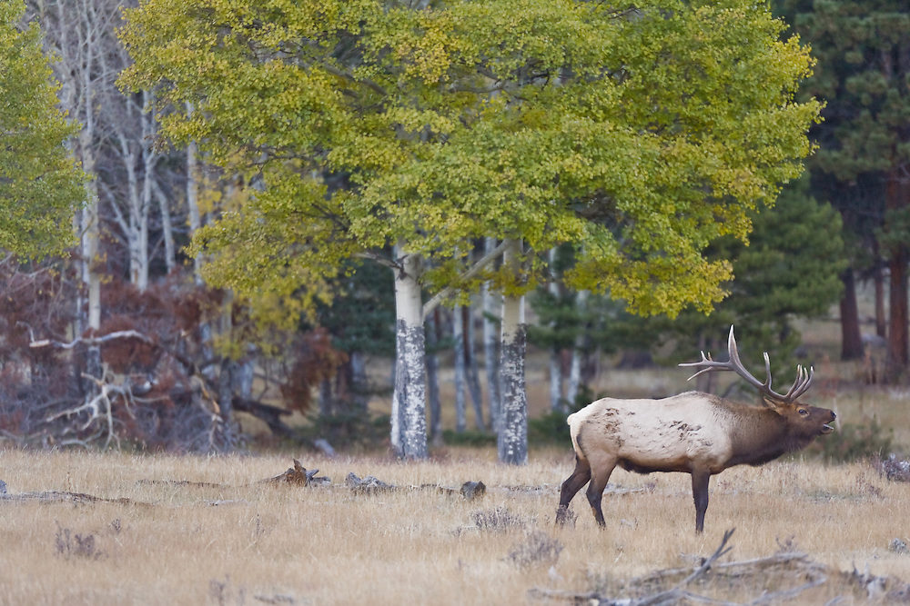 Rocky Mountain national Park, Saturday, October18, 2008.  (Photo/William Drumm)