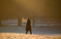 © Licensed to London News Pictures. 19/01/2020. London, UK. A woman walking at sunrise in a frost covered landscape at sunrise in Richmond Park in west London on a bright and freezing Winter morning. Photo credit: Ben Cawthra/LNP