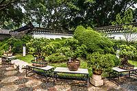bonsai garden Kowloon Walled City Park in Hong Kong