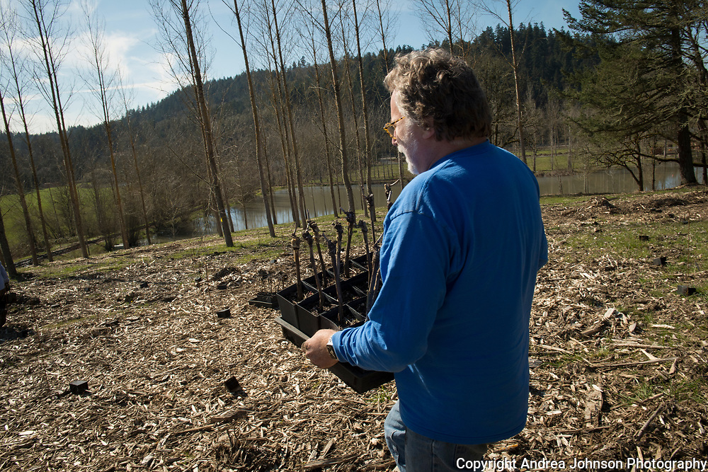 Mark Vlossak with crew planting new chardonnay and pinot noir vineyard for St. Innocent winery in Southern Willamette Valley, Oregon