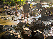 18 JUNE 2016 - DON KHONE, CHAMPASAK, LAOS:  A fisherman with his catch walks back to shore at Khon Pa Soi Waterfalls, on the east side of Don Khon. It's the smaller of the two waterfalls in Don Khon. Fishermen have constructed an elaborate system of rope bridges over the falls they use to get to the fish traps they set. Fishermen in the area are contending with lower yields and smaller fish, threatening their way of life. The Mekong River is one of the most biodiverse and productive rivers on Earth. It is a global hotspot for freshwater fishes: over 1,000 species have been recorded there, second only to the Amazon. The Mekong River is also the most productive inland fishery in the world. The total harvest of fish from the Mekong is approximately 2.5 million metric tons per year. By some estimates the harvest in the Tonle Sap (in Cambodia) had doubled from 1940 to 1995, but the number of people fishing the in the lake has quadrupled, so the harvest per person is cut in half. There is evidence of over fishing in the Mekong - populations of large fish have shrunk and fishermen are bringing in smaller and smaller fish.        PHOTO BY JACK KURTZ