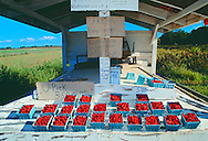 Steele Farm, Cutchogue New York, North Fork, Long Island,  Raspberry Farm stand
