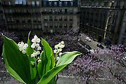 Saturday May 3rd 2008..Paris, France.At the window of an apartment.Avenue Carnot - 17th Arrondissement.