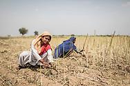 Trafic d'épouse 11032019. Haryana. Biwhat district. Village. La trentaine, le visage poupon, Sanjida vit dans une pièce unique avec son « mari », Mobin, et leurs quatre enfants. La jeune femme avait une quinzaine d'années quand plusieurs hommes l'ont enlevée à la sortie de l'école, dans l'Assam, pour l'emmener de force en Haryana et la vendre à Mobin. Ses parents ont mis six ans à la retrouver. Après des mois de recherches, son père a fini par entrer en contact avec une fille du même village, vendue elle aussi, qui l'a mis sur la piste des trafiquants. « Avec un oncle policier, mon père a forcé l'un des intermédiaires à l'emmener jusqu'à moi », relate Sanjida.