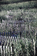 Dune fence helps protect  dunes from coastal erosion.