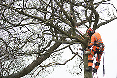 2021-04-29 HS2 resumes felling ancient woodland at Jones Hill Wood