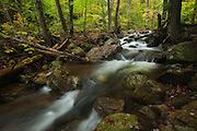 Adirondacks, NY.  The forest was beginning to take on the lighter greens and creeping into yellows as the season changed to autumn.  I wandered along Glen Brook, into the deeper shadows, which made the forest above seem brighter, even on this gray day.  After a rainy spell, the brook was up, flowing faster, like life itself seems to be these days.  I wonder, if I stood ankle deep in the water, if the current would tug at me...urging me to stay shallow and go with the flow.  Knee deep, I would move upstream, better to keep my balance, which is precarious lately, tipping in the wrong direction.  I let my thoughts take me soul deep, and hope for redemption.